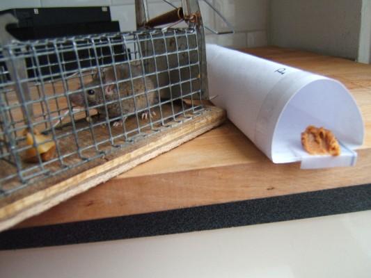 diervriendelijke muizenval, doe-het-zelf | essays